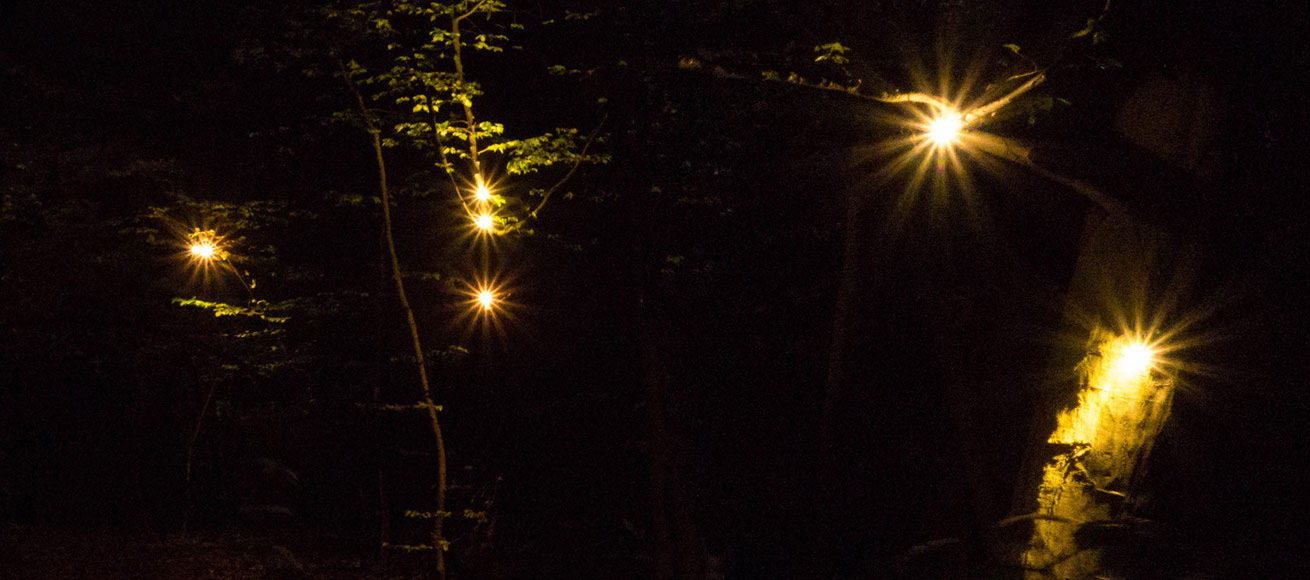 Long exposure picture of Sirènes Sylvestres' LEDs. Planterwald forest, Berlin, 2013.