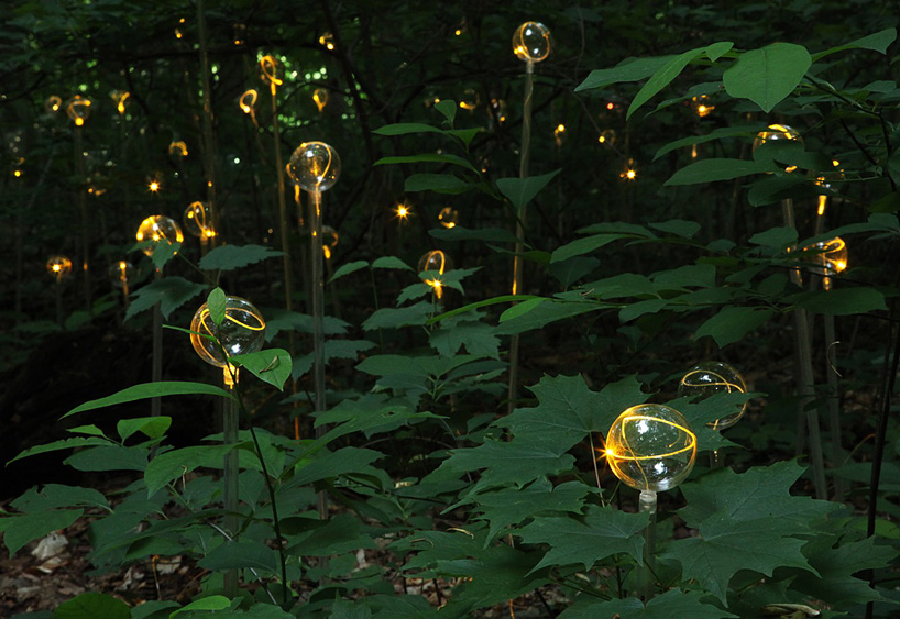 Bruce Munro Lights
