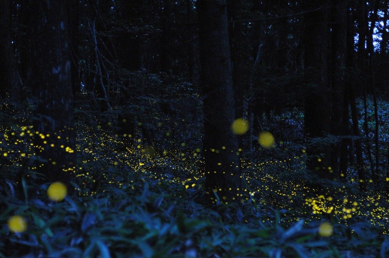 Fireflies by Tsuneaki Hiramatsu